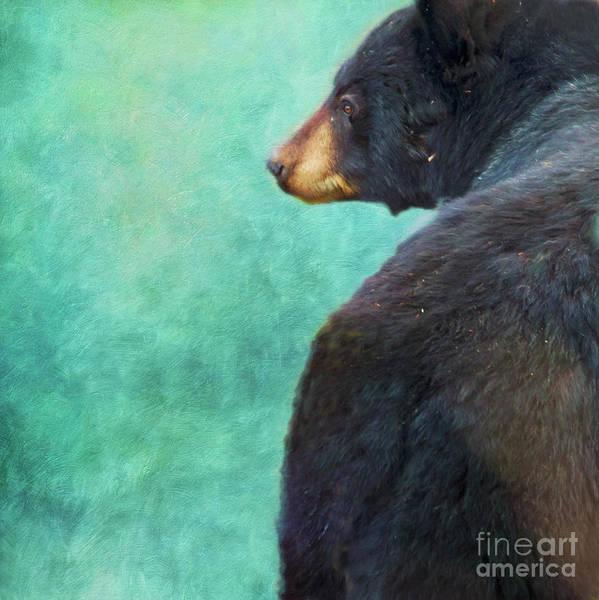 Wall Art - Photograph - Black Bear's Bum by Priska Wettstein