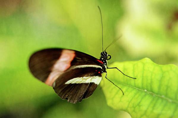 Butterfly On Flower Digital Art - Black Beauty by Maria Angelica Maira