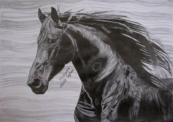 Friesian Drawing - Black Beauty by Melita Safran
