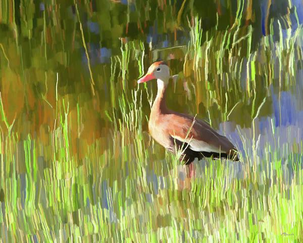 Marsh Bird Digital Art - Black-bellied Whistling-duck by Mike Darrah