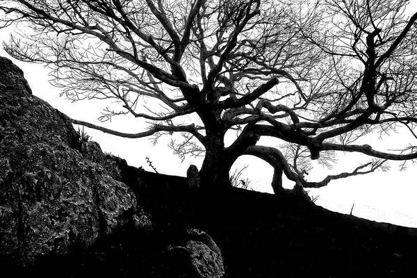 Photograph - Black Birch Silhouette 2009 08 by Jim Dollar