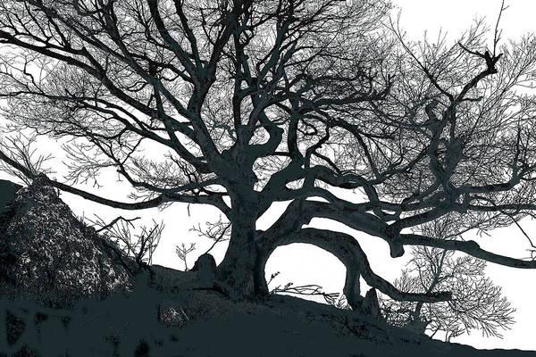 Photograph - Black Birch Silhouette 2011 06 05 by Jim Dollar