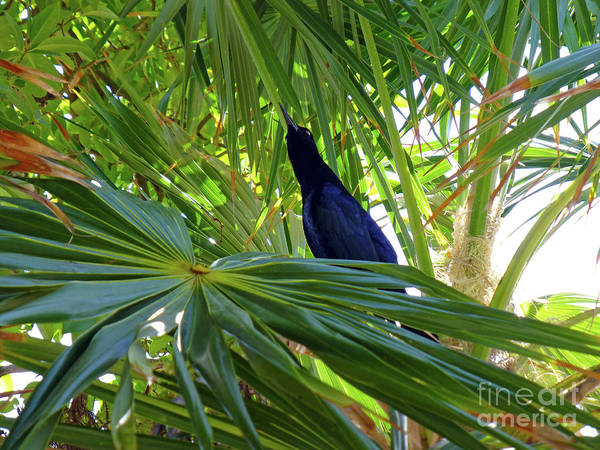 Photograph - Black Bird And Green Leaf by Francesca Mackenney