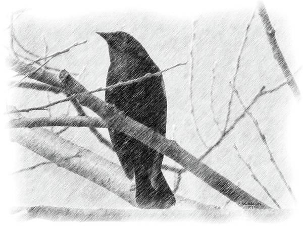 Digital Art - Black Bird by Artful Oasis