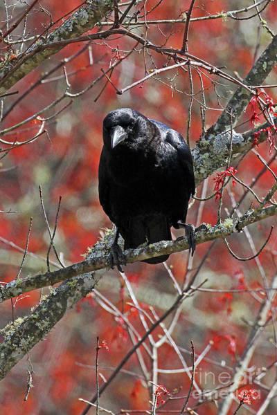 Photograph - Black Bird In Spring by Jennifer Robin