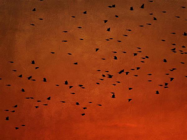Photograph - Black Birds by Charles McKelroy