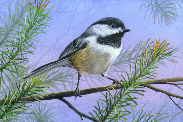 Wall Art - Painting - Black Cap Chickadee by Mike Brown