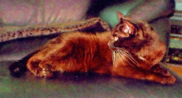 Digital Art - Black Cat by Anita Burgermeister