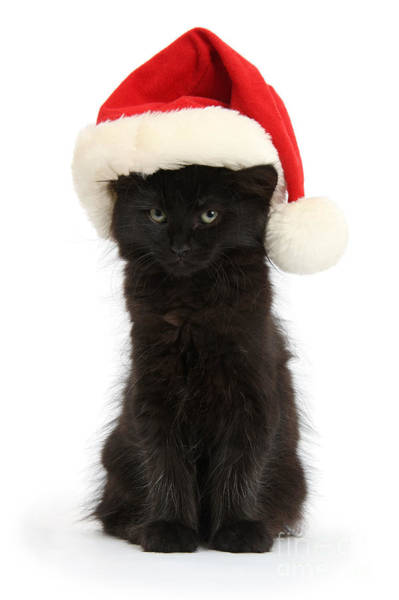 Photograph - Black Cat In Santa Hat by Warren Photographic