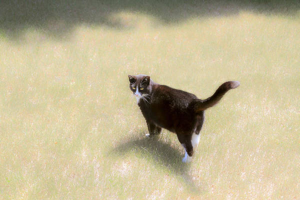 Photograph - Black Cat In The Sun by Bonnie Follett