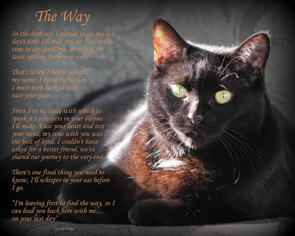 Black Cats Photograph - Black Cat The Way by Sue Long