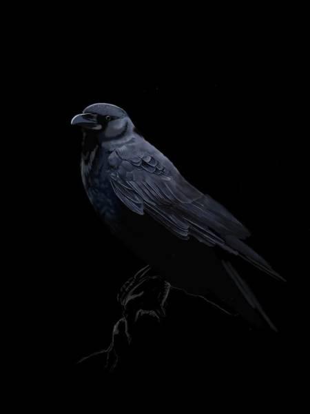 Raven Digital Art - Black Crow by KC Gillies