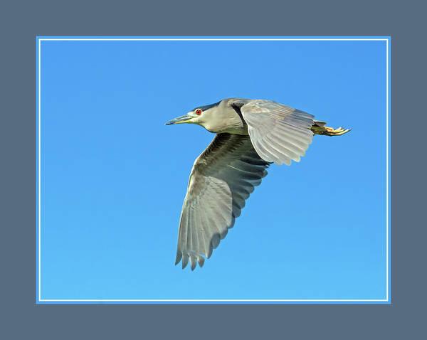 Photograph - Black-crowned Night Heron 1171-051518-1cr-matte by Tam Ryan