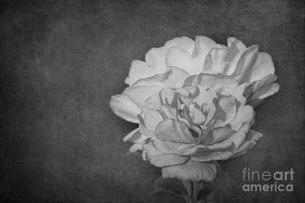 Photograph - Black Denim by Beve Brown-Clark Photography