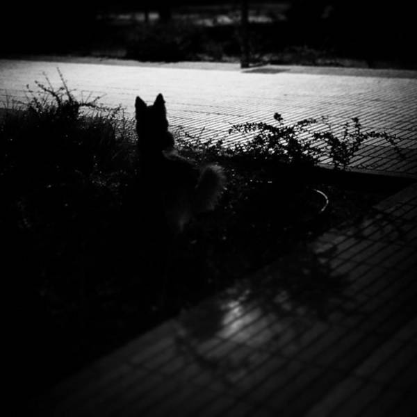 Black Dog  #dog #animal #pet #portrait Art Print