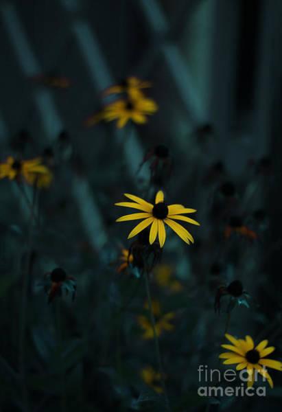 Golden Eye Photograph - Black Eyed Susan by Jasna Buncic