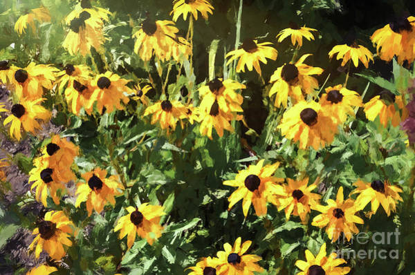 Photograph - Black-eyed Susan Yellow Flowers by Andrea Anderegg
