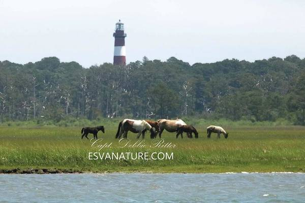 Photograph - Black Foal By The Lighthouse by Captain Debbie Ritter