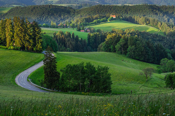 Photograph - Black Forest Morning by Shuwen Wu