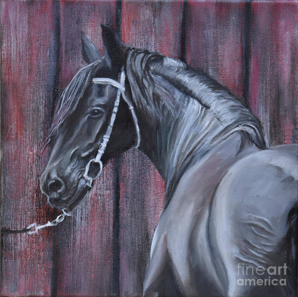 Painting - Black Friesian At The Stable by Anne Cameron Cutri