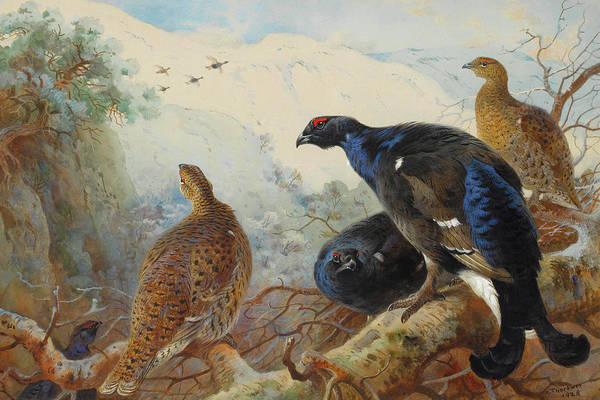 Mixed Media - Black Grouse And Gamebirds By Thorburn by Archibald Thorburn