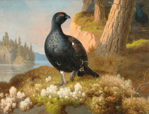 Painting - Black Grouse by Ferdinand von Wright