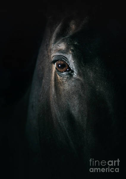 Photograph - Black Horse Eye Beautiful Close Up by Dimitar Hristov