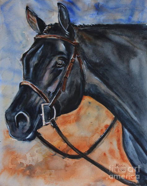 Aqha Painting - Black Horse Head by Maria's Watercolor