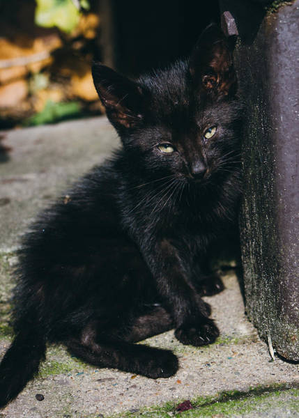 Wall Art - Photograph - Black Kitten In The Sun by Pati Photography