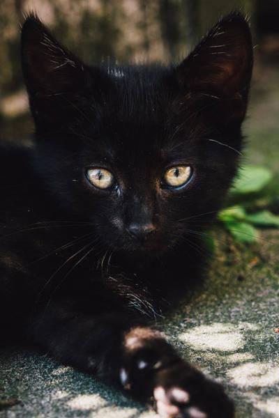 Wall Art - Photograph - Black Kitten Lying Down Closeup by Pati Photography