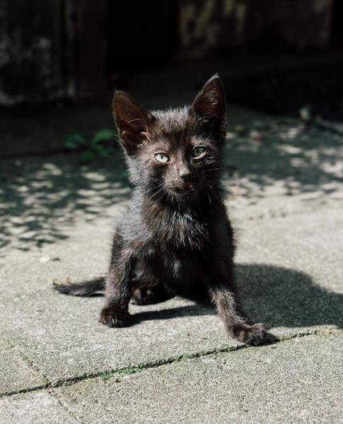 Wall Art - Photograph - Black Kitten by Pati Photography