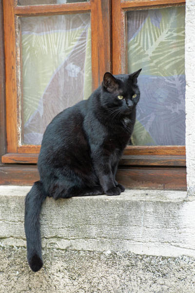 Chateauneuf Photograph - Black Kitty Cat On Windowsill, Chateauneuf, France by Curt Rush