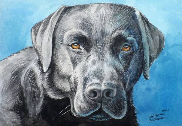 Painting - Black Lab by Christopher Shellhammer