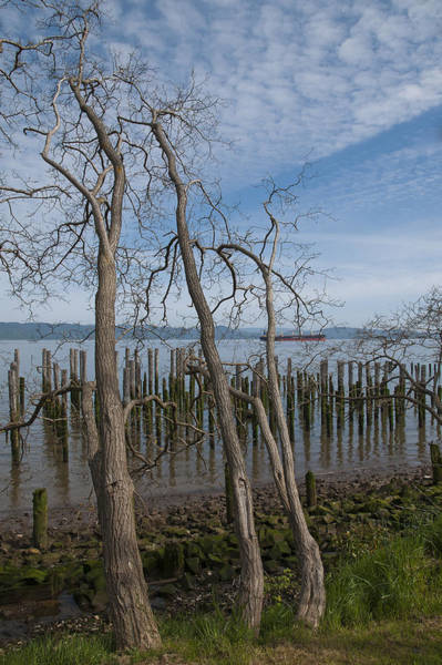 Photograph - Black Locust And Pilings by Robert Potts