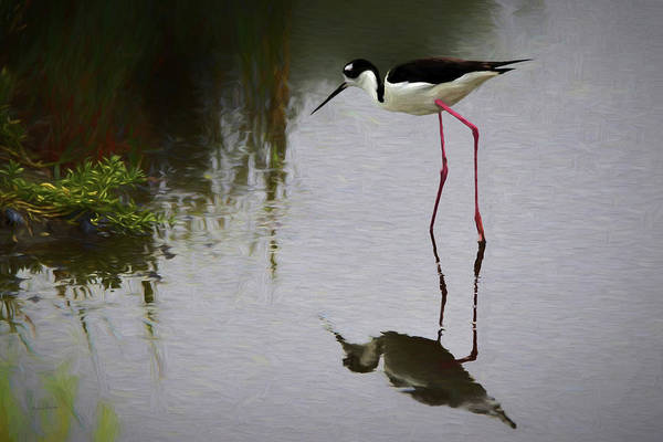 Shore Bird Digital Art - Black Necked Stilt 1 Da by Ernie Echols