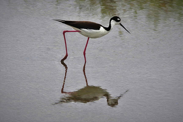Shore Bird Digital Art - Black Necked Stilt Da by Ernie Echols