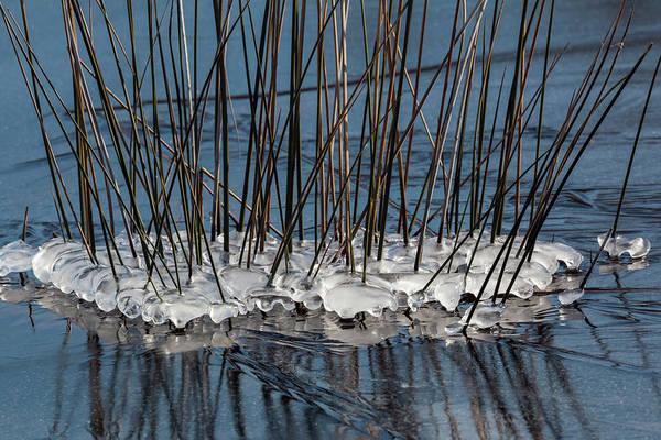 Photograph - Black Needlerush Color by Liza Eckardt