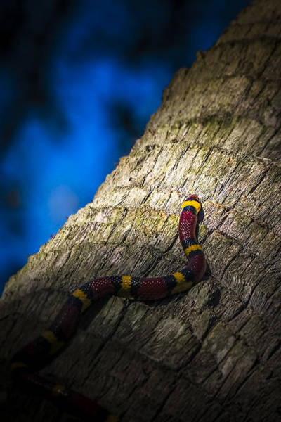 Grass Snake Photograph - Black Next To Red Don't Mean Jack by Marvin Spates