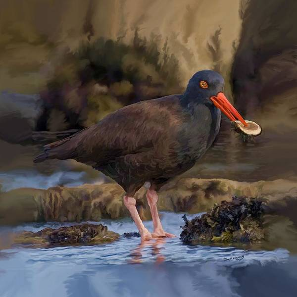 Wall Art - Painting - Black Oyster Catcher by David Wagner