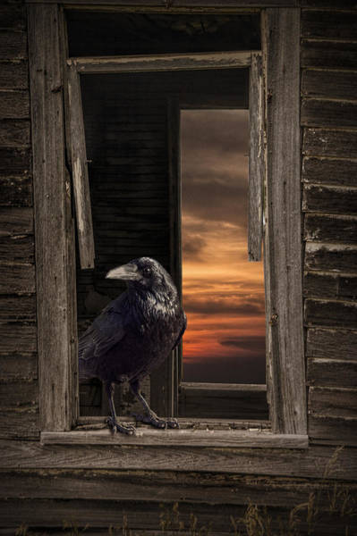 Photograph - Black Raven On The Windowsill Of An Abandoned House by Randall Nyhof