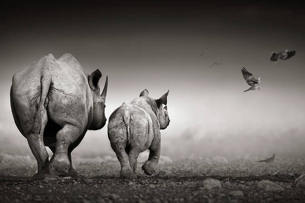 Two Birds Photograph - Black Rhino Cow With Calf  by Johan Swanepoel