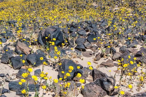 Photograph - Black Rocks - Yellow Flowers by Rick Wicker