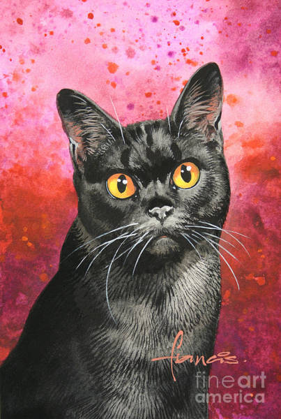 Bad Hair Wall Art - Painting - Black Shorthair by MGL Meiklejohn Graphics Licensing
