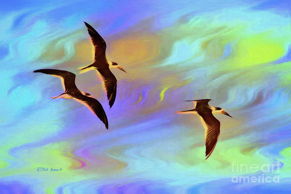 Painting - Black Skimmers Three by Deborah Benoit
