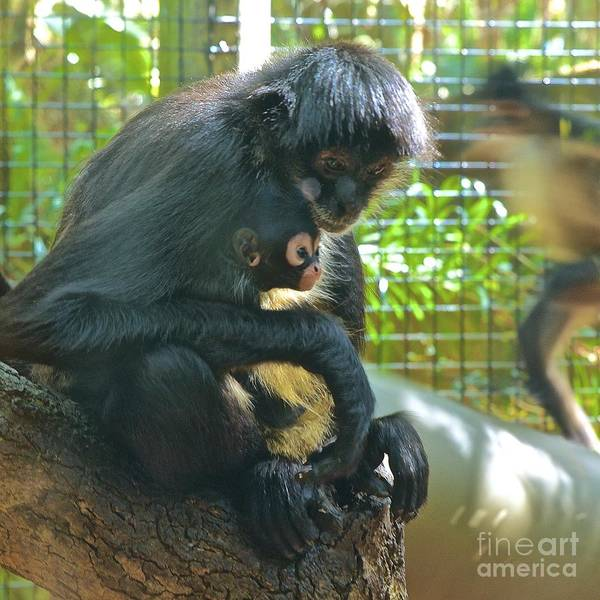 Wall Art - Photograph - Black Spider Monkey And Baby by AnnaJo Vahle