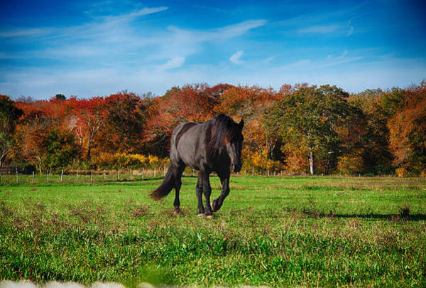 Photograph - Black Stalion In The Fall Colors by Jeff Folger