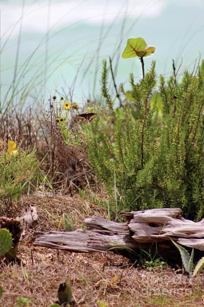 Photograph - Black Swallowtail Butterfly On Beach Vertical by Karen Adams