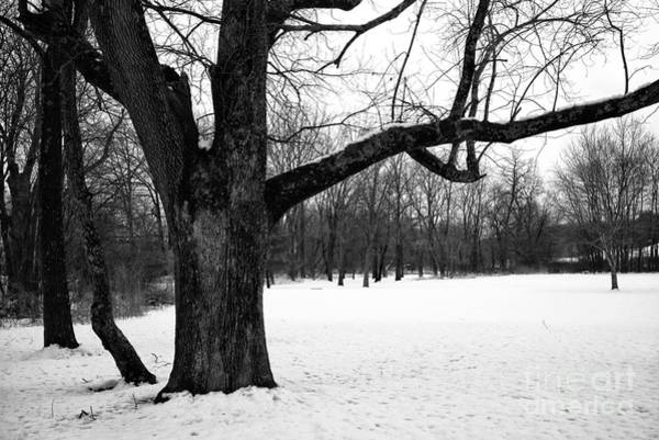 Photograph - Black Tree In Winter by John Rizzuto