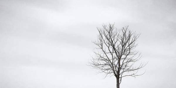 Wall Art - Photograph - Black Tree White Sky by Scott Norris