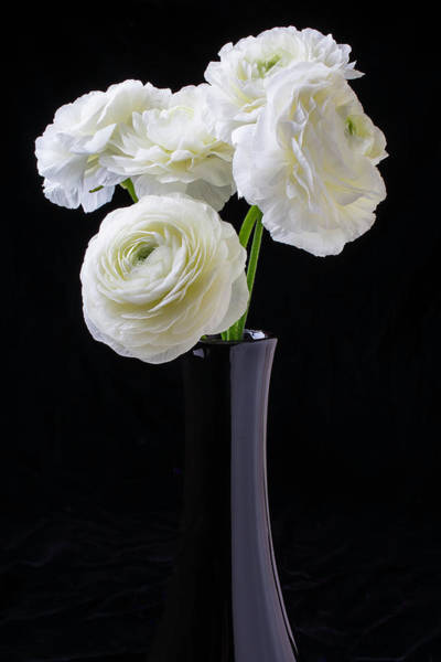 Ranunculus Photograph - Black Vase With White Ranunculus by Garry Gay
